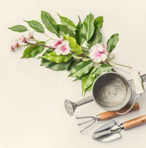 Let's Talk Gardening
